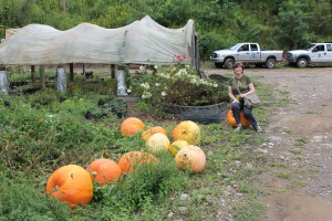 Barb relaxes on one of the Cathey grown pumpkins. Each gourd can make 15 pumpkin pies.