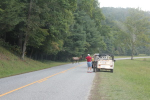 Side of the road in the Cataloochie Valley. Elk meander all around you!