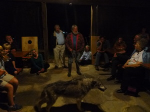 Special event: Wolf Man who owns 4 wolves introduces this highly tame wolf to guests at the Ranch. A big hit with everyone!