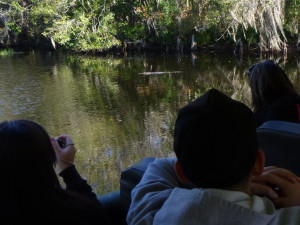 Other tourists on our bus viewed and photographed gators for the very first time and were quite excited about it!