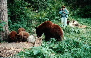 This is how not to photograph wildlife, especially a bear with cubs, especially not!