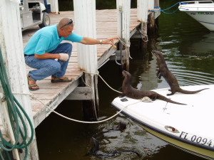 The real little rascals know how to take apart a boat. Otters all!!