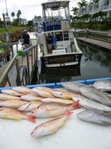 The rocks held a fine kettle of lane snapper, grunts and porgies!