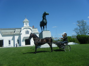 Morgan Horse Farm in VT!
