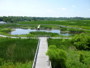 Wetlands protection and education teach about the life's blood of our world and our local environments.